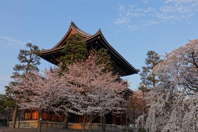 京都桜速報2018_09 No30