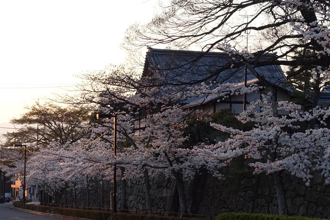 京都桜速報2018_09 No36