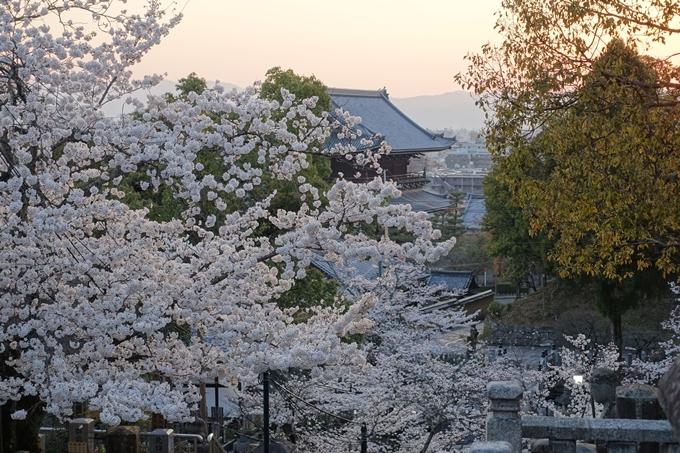 京都桜速報2018_09 No42