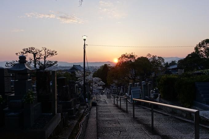 京都桜速報2018_09 No43
