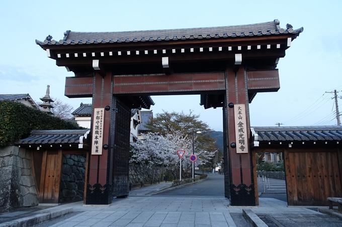京都桜速報2018_09 No35