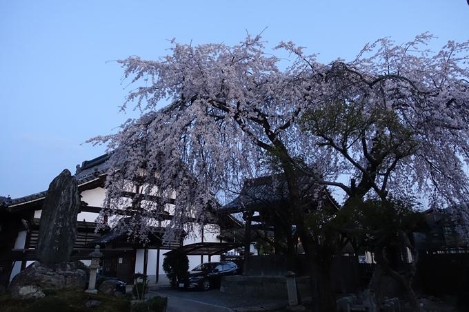 京都桜速報2018_09 No45