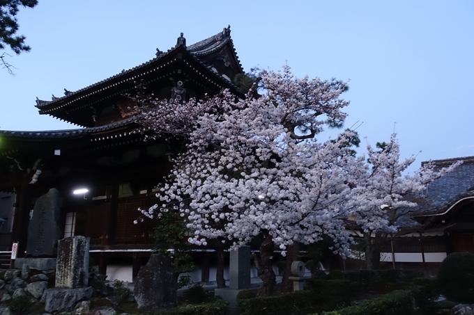 京都桜速報2018_09 No46