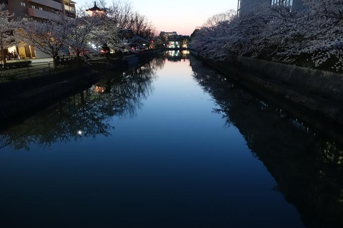 京都桜速報2018_09 No54