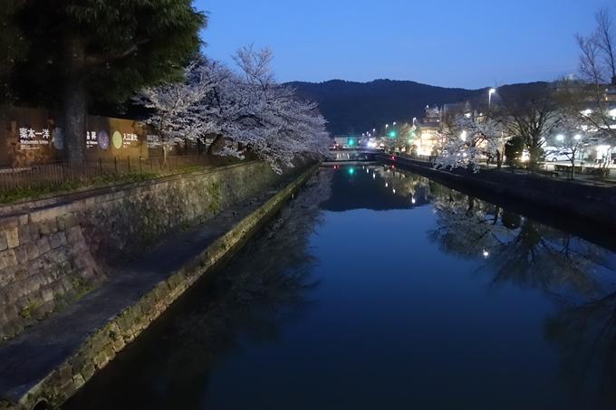 京都桜速報2018_09 No55