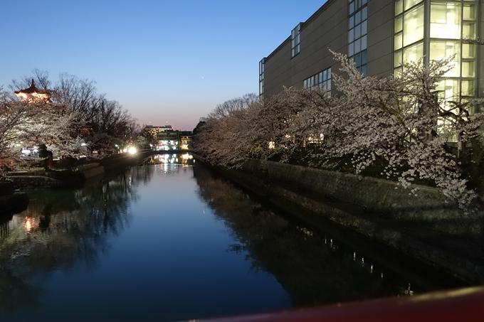 京都桜速報2018_09 No56