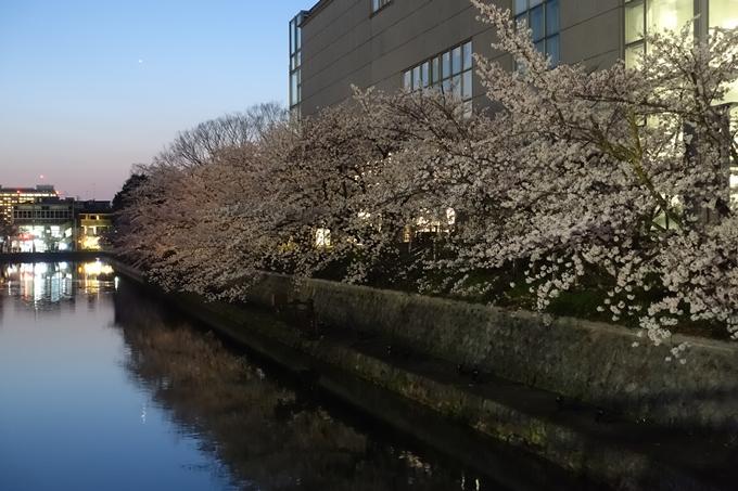 京都桜速報2018_09 No57