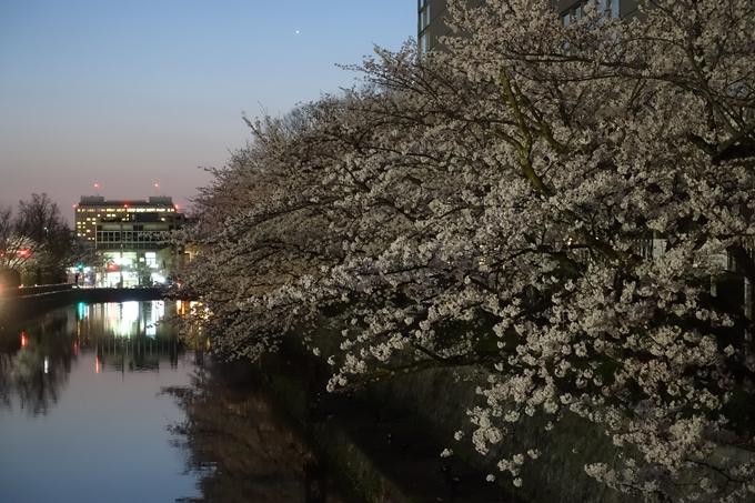 京都桜速報2018_09 No58