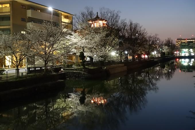 京都桜速報2018_09 No59