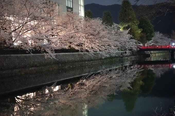 京都桜速報2018_09 No61
