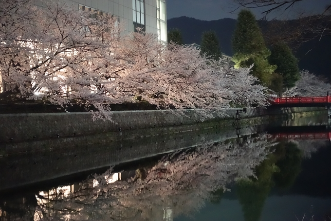 京都桜速報2018_09 No62