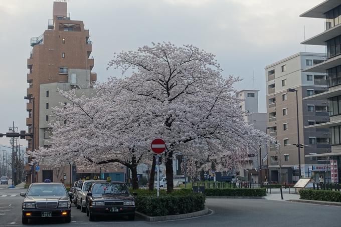 京都桜速報2018_10 No2