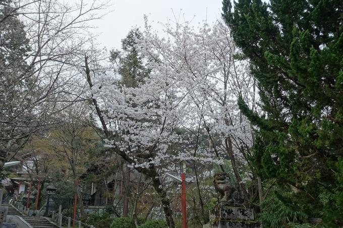 京都桜速報2018_10 No5