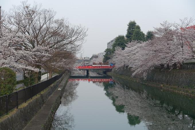 京都桜速報2018_10 No13