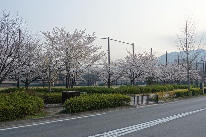 京都桜速報2018_10 No21