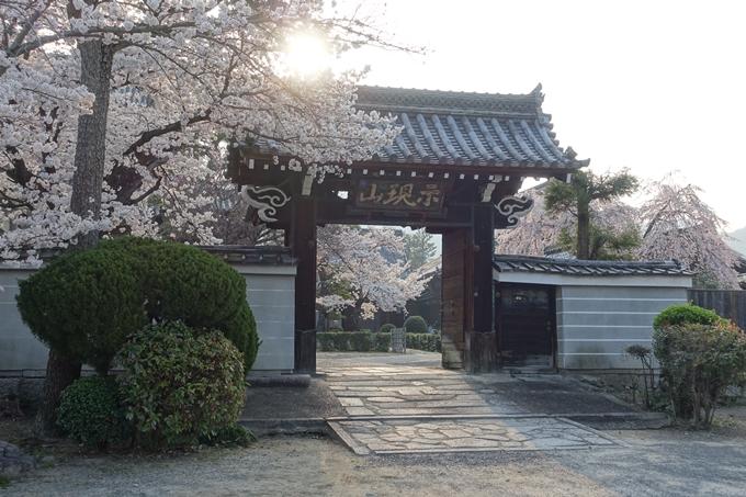 京都桜速報2018_10 No30
