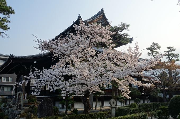 京都桜速報2018_10 No32