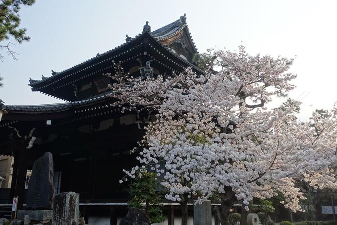 京都桜速報2018_10 No37