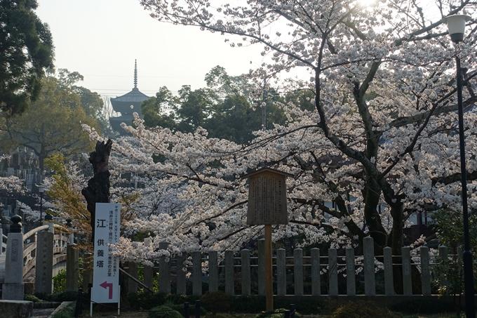 京都桜速報2018_10 No45