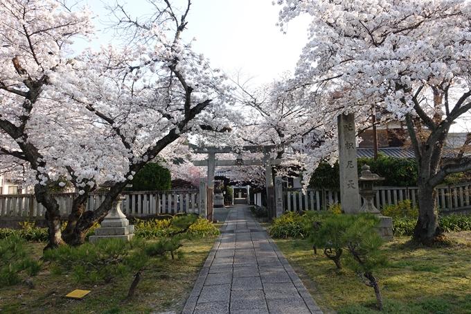 京都桜速報2018_10 No49
