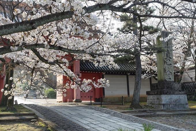 京都桜速報2018_10 No53