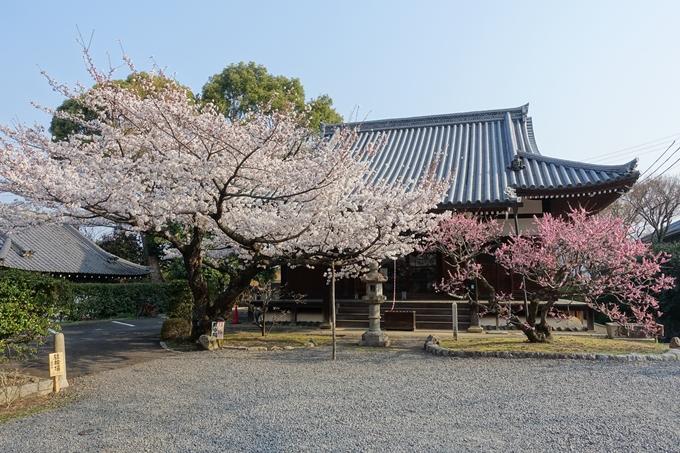 京都桜速報2018_10 No55