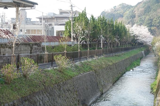 京都桜速報2018_10 No60