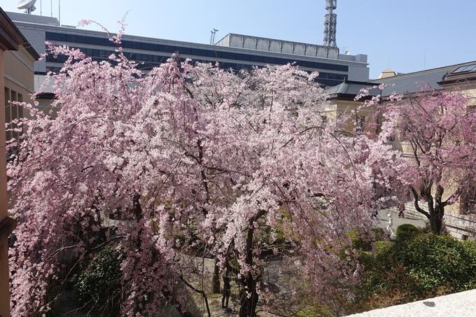 京都桜速報2018_11 No18