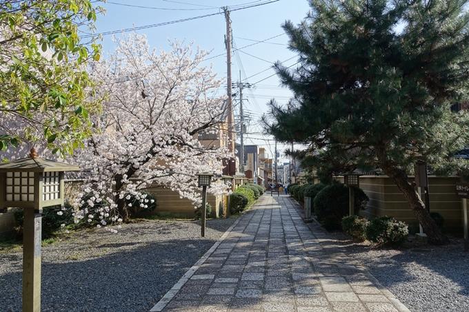 京都桜速報2018_11 No27