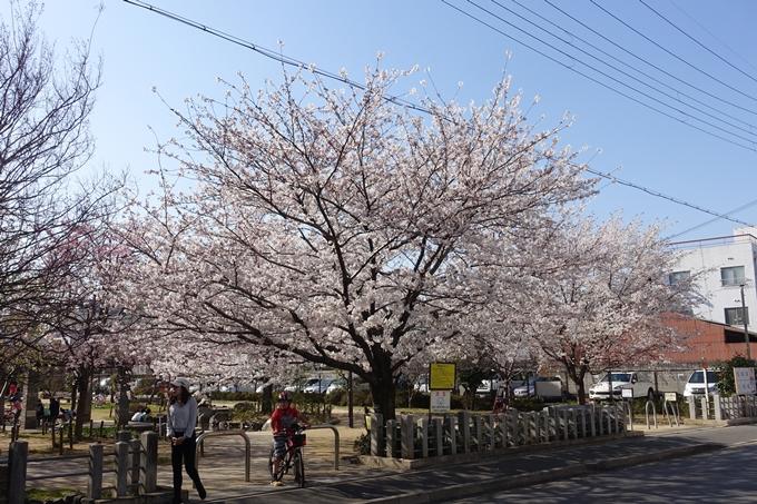 京都桜速報2018_11 No28