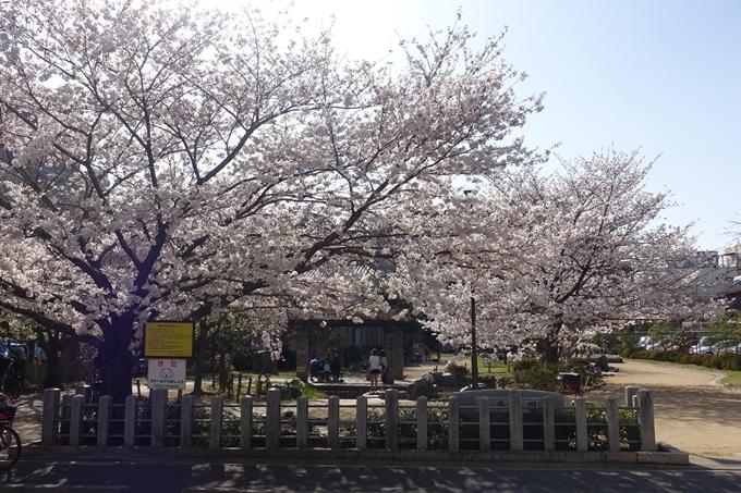 京都桜速報2018_11 No29