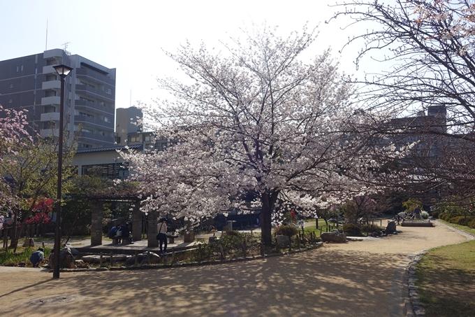 京都桜速報2018_11 No30