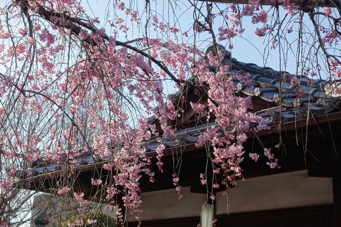 京都桜速報2018_11 No47