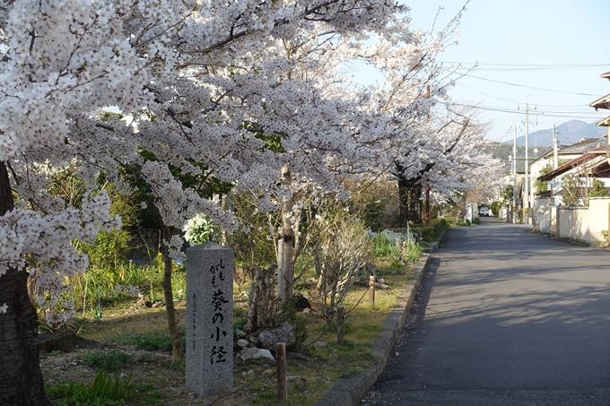 京都桜速報2018_11 No57