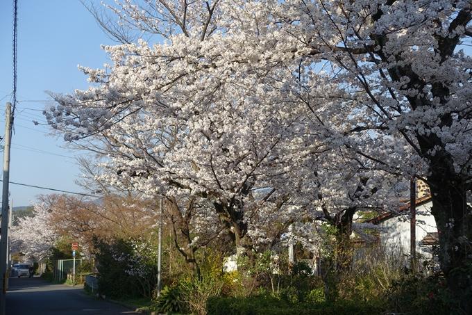 京都桜速報2018_11 No58