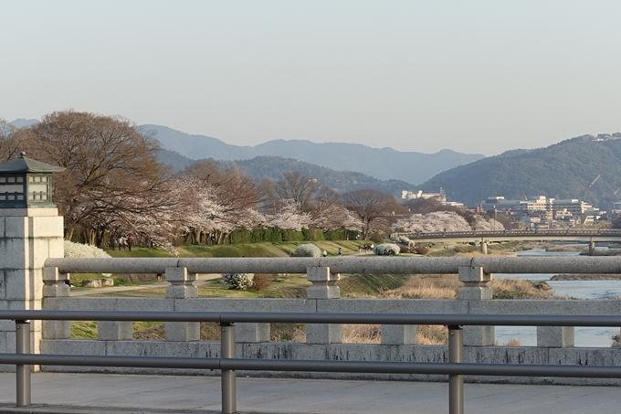 京都桜速報2018_11 No67