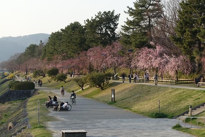 京都桜速報2018_11 No68