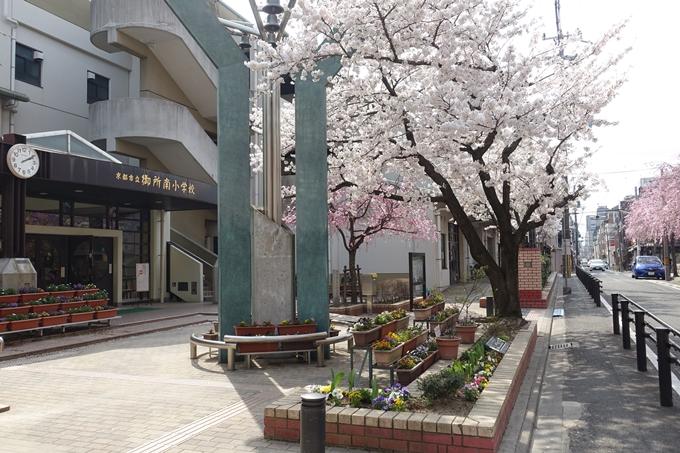 京都桜速報2018_12 No13