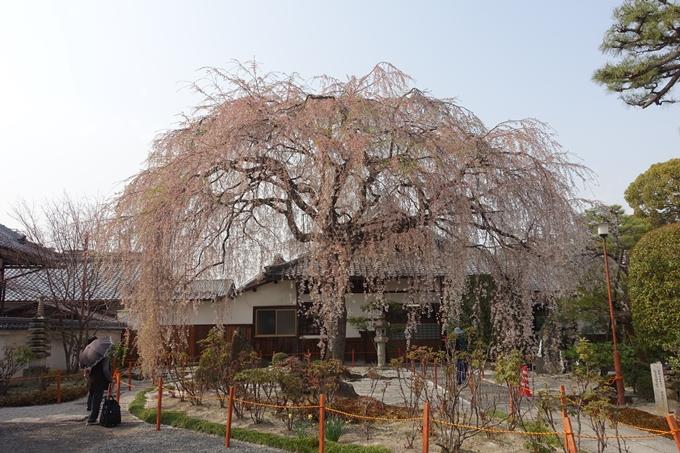京都桜速報2018_12 No26