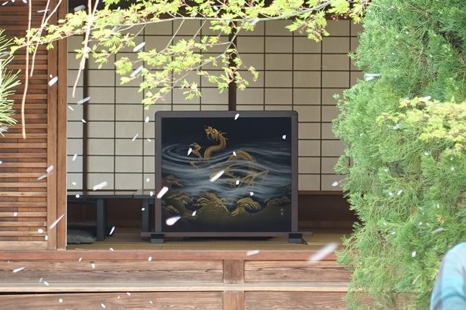 京都桜速報2018_12 No30