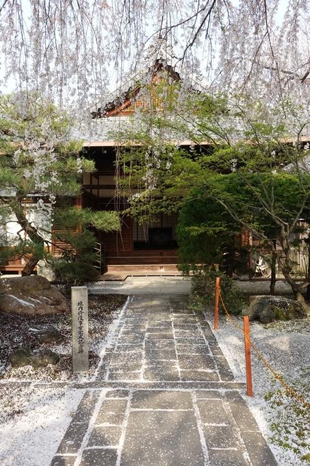 京都桜速報2018_12 No31
