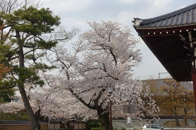 京都桜速報2018_12 No34