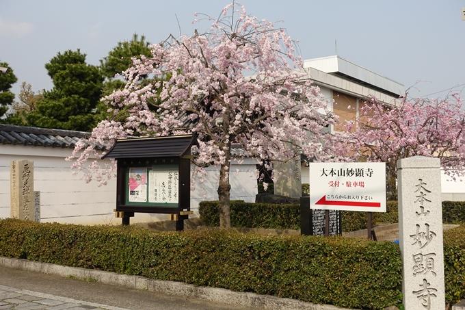 京都桜速報2018_12 No40