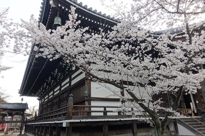 京都桜速報2018_12 No48