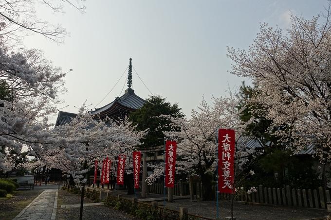 京都桜速報2018_12 No55
