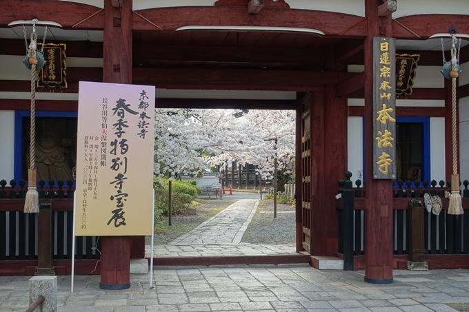 京都桜速報2018_12 No56