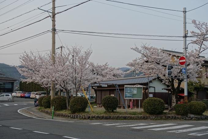 京都桜速報2018_12 No66
