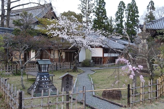 京都桜速報2018_12 No70