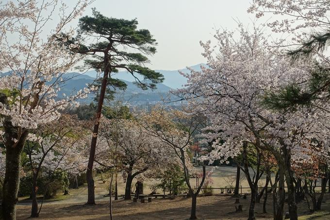京都桜速報2018_13 No9