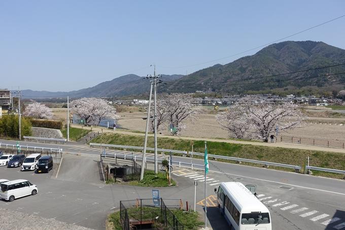 京都桜速報2018_16 No7